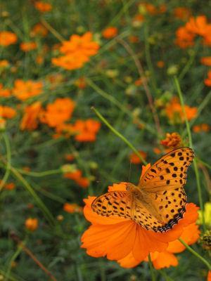 Fall_butterfly.jpg