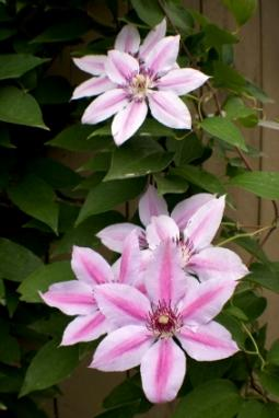 What to Grow in the Southern Fall Garden