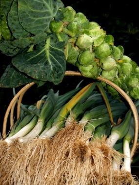 Best Producing Winter Vegetable Garden