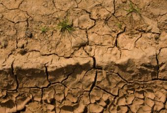 Long Term Effects of Soil Pollution