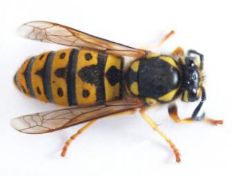 How do Pesticides Kill Bugs?