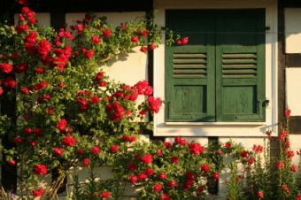 Rose Types