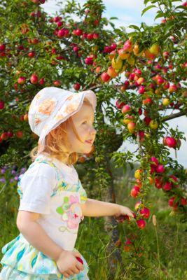 Growing Fruit Trees and Berries: Interview with Stella Otto