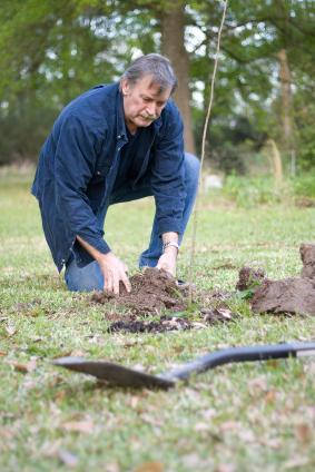 Planting new fruit trees