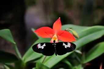 Butterfly_on_flower.jpg