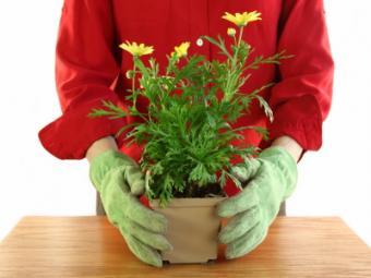 Dyna Grow Fertilizer