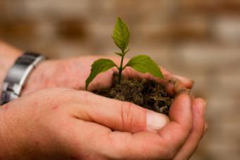 California Seedlings