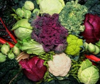 Fall Vegetable Gardens by Region