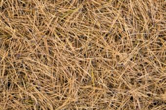 Pine Needles Make Good Mulch