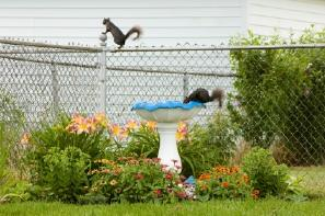 Keep Squirrels Out of the Garden
