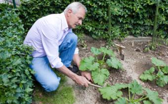 Florida Fall Vegetable Gardens