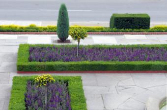 https://cf.ltkcdn.net/garden/images/slide/112024-426x282-iStock_000007258710XSmall.jpg