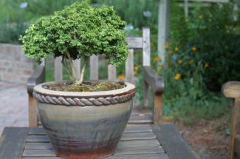 https://cf.ltkcdn.net/garden/images/slide/112025-425x282-2.jpg