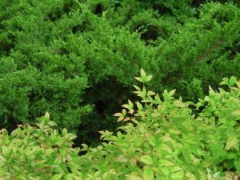 https://cf.ltkcdn.net/garden/images/slide/112053-400x300-Nandina-Shrub.jpg