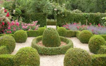 https://cf.ltkcdn.net/garden/images/slide/112057-439x273-Boxwood-Shrubs.jpg