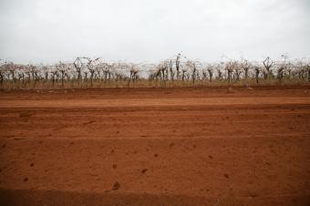 https://cf.ltkcdn.net/garden/images/slide/112067-849x565-Australian-Red-Soil.jpg
