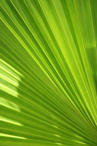 https://cf.ltkcdn.net/garden/images/slide/112172-566x848-palm.jpg