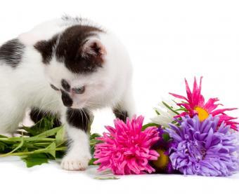 https://cf.ltkcdn.net/garden/images/slide/112176-767x626-asters-kitten.jpg