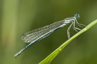 https://cf.ltkcdn.net/garden/images/slide/112189-849x565-Dragonfly.jpg