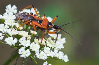 https://cf.ltkcdn.net/garden/images/slide/112191-850x565-Assassin-Bug.jpg