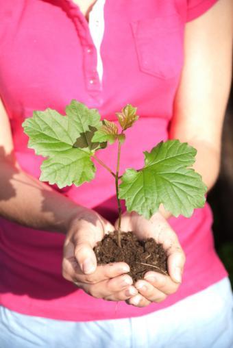 https://cf.ltkcdn.net/garden/images/slide/112198-567x847-free-tree-seedling-4.jpg