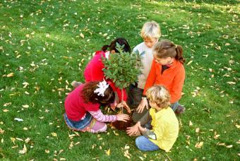 https://cf.ltkcdn.net/garden/images/slide/112201-847x567-free-tree-seedling-5.jpg