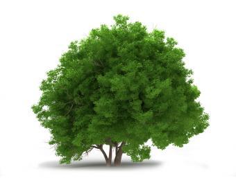 https://cf.ltkcdn.net/garden/images/slide/112203-797x602-free-tree-seedling-8.jpg
