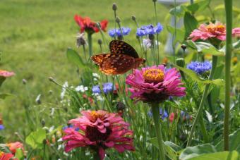 https://cf.ltkcdn.net/garden/images/slide/112214-840x560-zinniasLTK.jpg