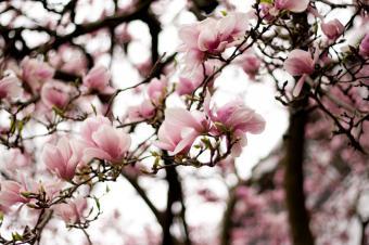 https://cf.ltkcdn.net/garden/images/slide/112226-849x565-Camellia.jpg