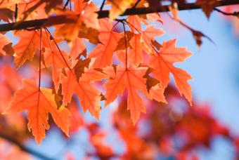 https://cf.ltkcdn.net/garden/images/slide/112236-847x567-Orange-Leaves.jpg