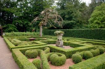 https://cf.ltkcdn.net/garden/images/slide/112271-850x563-Boxwood.jpg
