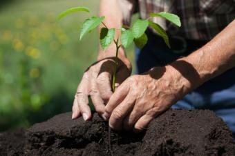 Deciduous Seedlings