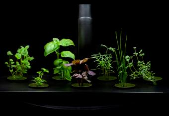 Build Your Own Hydroponics System