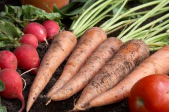 What Are Good Vegetables to Plant in Late Summer?