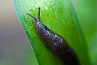 https://cf.ltkcdn.net/garden/images/slide/149775-847x567-Slug-on-a-leaf.jpg
