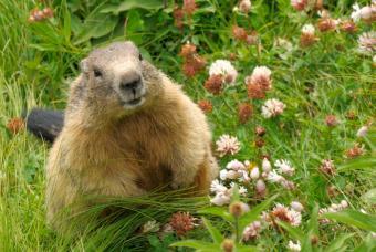 https://cf.ltkcdn.net/garden/images/slide/149780-847x567-Groundhog.jpg