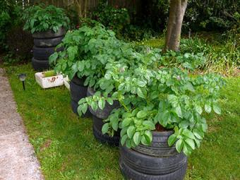 Potato tire stacks