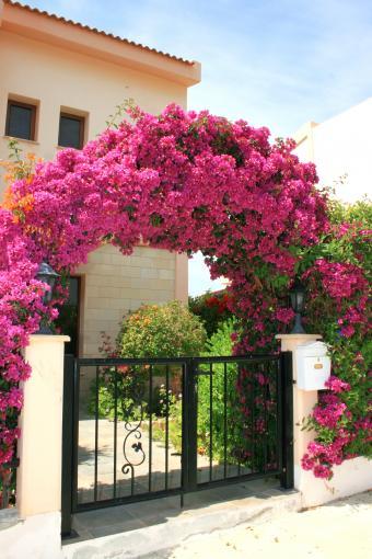 https://cf.ltkcdn.net/garden/images/slide/171046-567x850-Floral-arch-mailbox-TS.jpg