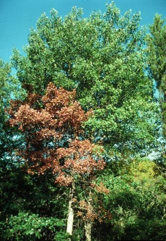 Signs That a Tree Is Dying