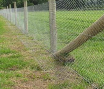 L-shaped wire on rabbit-proof fence