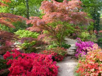 https://cf.ltkcdn.net/garden/images/slide/174253-801x599-iStock_000017246621Small.jpg