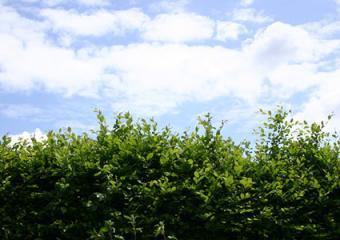 broadleaf shrubbery