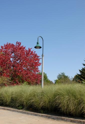 https://cf.ltkcdn.net/garden/images/slide/174457-448x650-deco-grass-tall-groundcover.jpg