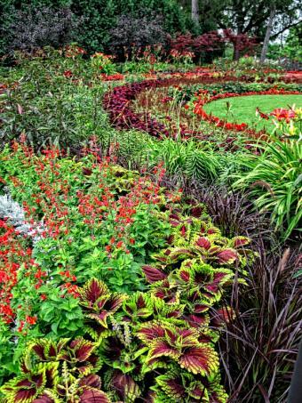 https://cf.ltkcdn.net/garden/images/slide/174472-488x650-deco-grass-annual-beds.jpg
