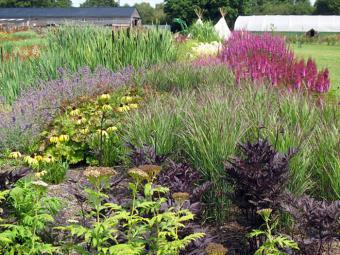 https://cf.ltkcdn.net/garden/images/slide/174685-700x524-Sussex-Prairie-Garden-new.jpg