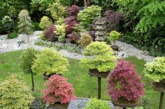 https://cf.ltkcdn.net/garden/images/slide/175334-850x566-trees-in-planters.jpg