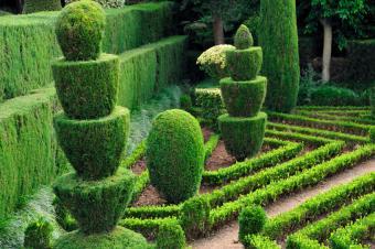 https://cf.ltkcdn.net/garden/images/slide/175339-850x566-topiary-plants-in-garden.jpg