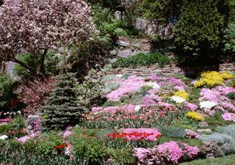colorful hillside planting