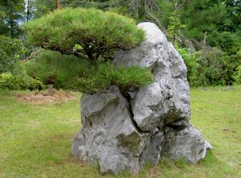 https://cf.ltkcdn.net/garden/images/slide/175374-806x596-rock-granite-monlith.jpg