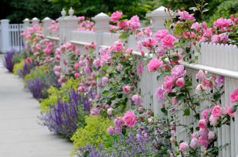 https://cf.ltkcdn.net/garden/images/slide/175680-850x563-pollination-flower-border.jpg